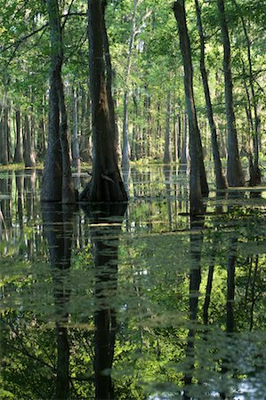Lake Martin, Lafayette, Louisiana, USA Stock Photo - Premium Royalty-Free, Code: 600-02265124