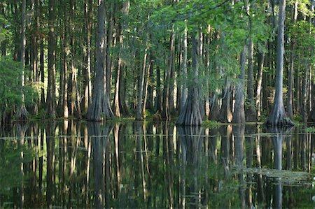 Lake Martin, Lafayette, Louisiana, USA Stock Photo - Premium Royalty-Free, Code: 600-02265125
