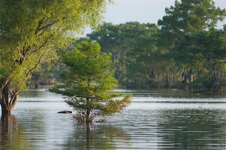 Atchafalaya Basin, Lafayette, Louisiana, USA Stock Photo - Premium Royalty-Free, Code: 600-02265122