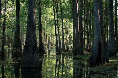 Lake Martin, Lafayette, Louisiana, USA Stock Photo - Premium Royalty-Free, Code: 600-02265123