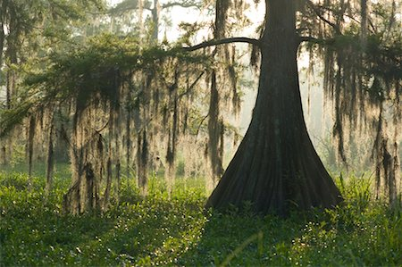 Lake Martin, Lafayette, Louisiana, USA Stock Photo - Premium Royalty-Free, Code: 600-02265137