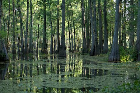 Lake Martin, Lafayette, Louisiana, USA Stock Photo - Premium Royalty-Free, Code: 600-02265139