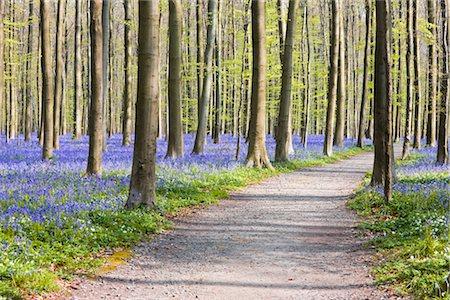 Path Through Beech Trees, Flemish Braband, Belgium Stock Photo - Premium Royalty-Free, Code: 600-02428419