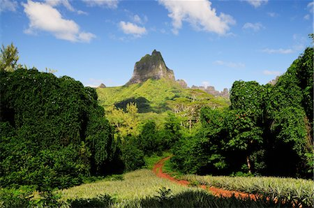 french polynesia - Path to Mount Mauaroa, Moorea, French Polynesia Stock Photo - Premium Royalty-Free, Code: 600-02590677