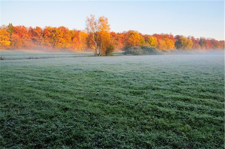 Field and Forest in Autumn, Fuerstenfeldbruck, Bavaria, Germany Stock Photo - Premium Royalty-Free, Code: 600-02633498