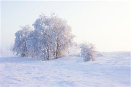 Snow Covered Trees, Haute Fagnes, Wallonia, Belgium Stock Photo - Premium Royalty-Free, Code: 600-02645874