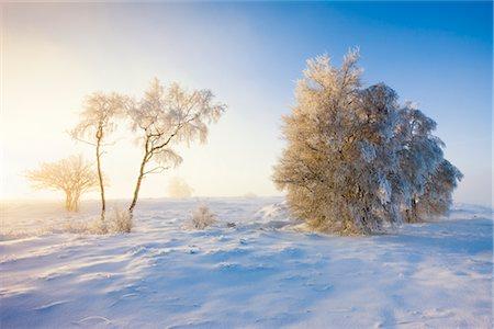 Snow Covered Trees, Haute Fagnes, Wallonia, Belgium Stock Photo - Premium Royalty-Free, Code: 600-02645875