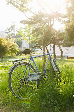 Bicycle Leaning Against Small Tree, Seoul, South Korea Stock Photo - Premium Royalty-Free, Code: 600-02694449