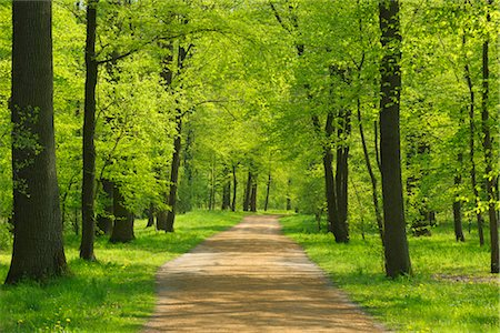 Path Through Forest in Spring, Aschaffenburg, Bavaria, Germany Stock Photo - Premium Royalty-Free, Code: 600-02691473