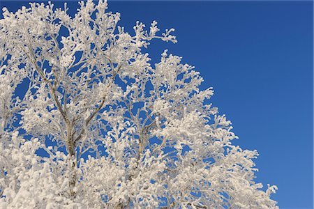 pretty background designs - Close-up of Hoar Frost on Tree Branches Stock Photo - Premium Royalty-Free, Code: 600-02860253