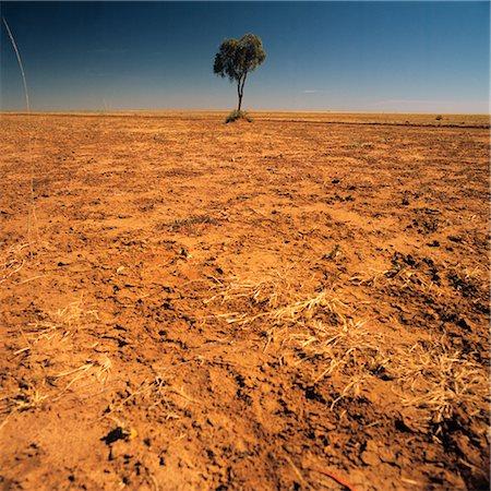 Lone Tree on a Barren Plain Stock Photo - Premium Royalty-Free, Code: 600-02885977