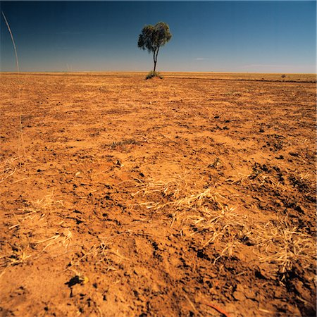 Lone Tree on a Barren Plain Stock Photo - Premium Royalty-Free, Code: 600-02885977