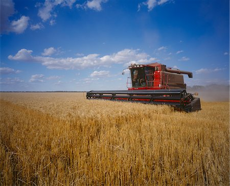 Wheat Harvesting, Australia Stock Photo - Premium Royalty-Free, Code: 600-02886559
