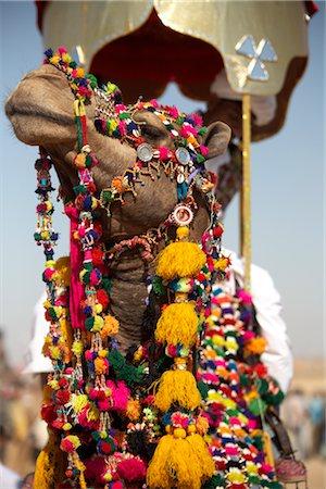 rajasthan camel - Camel Festival, Jaisalmer, Rajasthan, India Stock Photo - Premium Royalty-Free, Code: 600-02957977