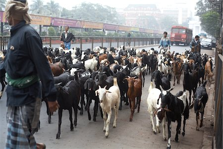 Herding Goats, Kolkata, West Bengal, India Stock Photo - Premium Royalty-Free, Code: 600-02958065