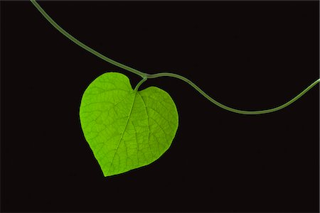 Heart Shaped Leaf on Black Background Stock Photo - Premium Royalty-Free, Code: 600-03003466