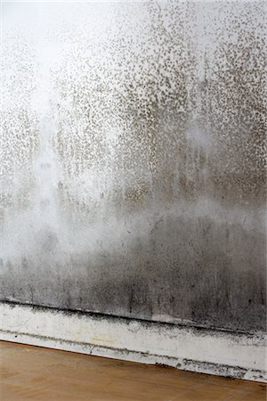 dirty - Moldy Wall Stock Photo - Premium Royalty-Free, Code: 600-03069451