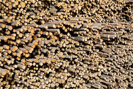 forestry - Stack of Pine Logs, Williams Lake, British Columbia, Canada Stock Photo - Premium Royalty-Free, Code: 600-03075424
