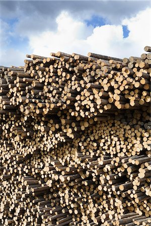 Stack of Pine Logs, Williams Lake, British Columbia, Canada Stock Photo - Premium Royalty-Free, Code: 600-03075425