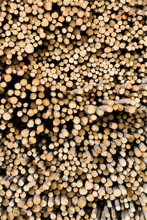 forestry - Stack of Pine Logs, Williams Lake, British Columbia, Canada Stock Photo - Premium Royalty-Free, Code: 600-03075423