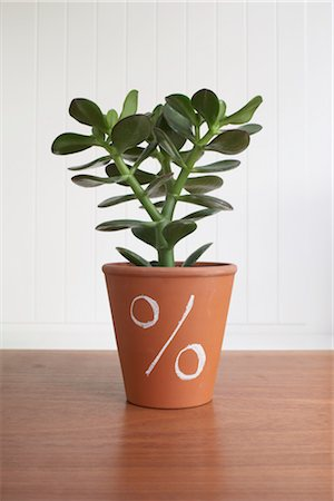 percentage symbol - Potted Jade Plant with Percentage Sign Stock Photo - Premium Royalty-Free, Code: 600-03178754