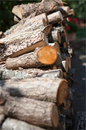 Close-up of Woodpile Stock Photo - Premium Royalty-Free, Code: 600-03178788