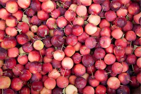 Organic Apples, Penticton, Okanagan Valley, British Columbia, Canada Stock Photo - Premium Royalty-Free, Code: 600-03294795