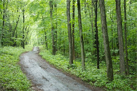 road landscape - Road Through Woods Stock Photo - Premium Royalty-Free, Code: 600-03405543