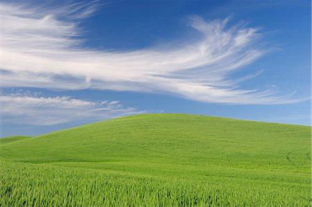 Wheat Field, Palouse Region, Palouse, Whitman County, Washington State, USA Stock Photo - Premium Royalty-Free, Code: 600-03445370