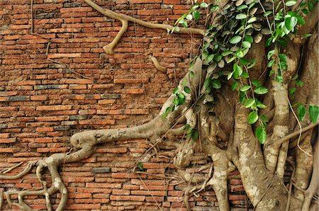 southeast asian - Close-up of Roots on Brick Wall, Wat Mahathat, Ayutthaya, Thailand Stock Photo - Premium Royalty-Free, Code: 600-03451297
