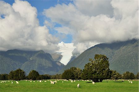 Farmland and Fox Glacier, West Coast, South Island, New Zealand Stock Photo - Premium Royalty-Free, Code: 600-03508355
