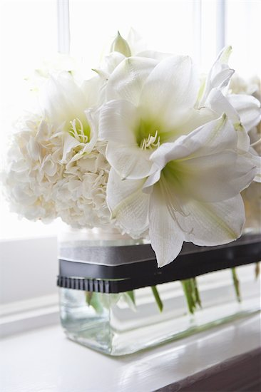 Flowers on Window Sill Stock Photo - Premium Royalty-Free, Artist: Ikonica, Image code: 600-03519143