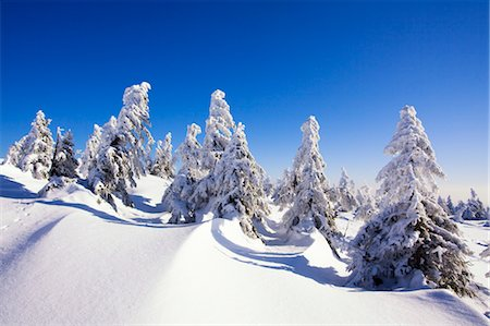snow covered trees - Fir Trees Covered in Snow, Brocken, Harz Mountains, Saxony-Anhalt, Germany Stock Photo - Premium Royalty-Free, Code: 600-03573912