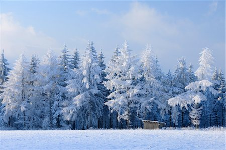 snow covered trees - Snow Covered Fir Trees, Wasserkuppe, Rhon Mountains, Hesse, Germany Stock Photo - Premium Royalty-Free, Code: 600-03615515