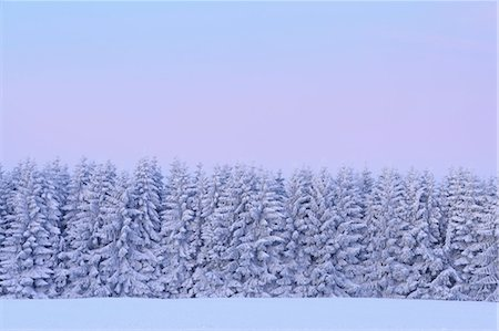 snow covered trees - Snow Covered Fir Trees at Dawn, Wasserkuppe, Rhon Mountains, Hesse, Germany Stock Photo - Premium Royalty-Free, Code: 600-03615510