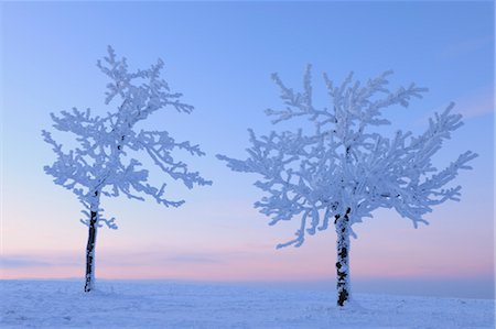 snow covered trees - Snow Covered Trees at Dusk, Wasserkuppe, Rhon Mountains, Hesse, Germany Stock Photo - Premium Royalty-Free, Code: 600-03615540