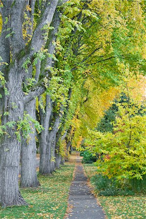 Elm Trees, 13th Avenue, West Point Grey, Vancouver, British Columbia, Canada Stock Photo - Premium Royalty-Free, Code: 600-03615875