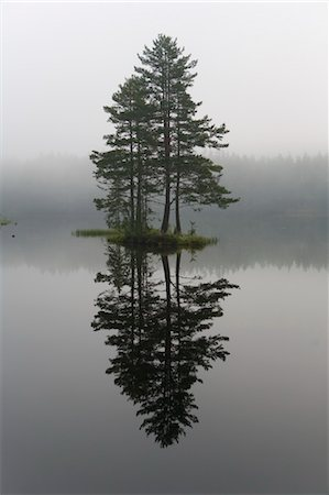 Reflection of Tree in Lake, Telemark County, Eastern Norway, Norway Stock Photo - Premium Royalty-Free, Code: 600-03621208