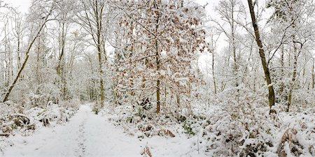 panoramic winter scene - Fresh Snowfall, Pacific Spirit Regional Park, Point Grey, Vancouver, British Columbia Stock Photo - Premium Royalty-Free, Code: 600-03621326