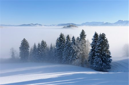 snow covered trees - Trees with Mist in Winter Landscape. Canton of Berne, Switzerland Stock Photo - Premium Royalty-Free, Code: 600-03644639