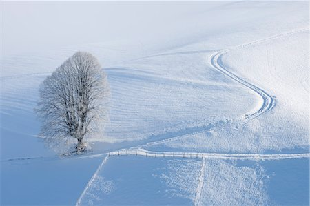 snow covered trees - Lime Tree with Hoar-frost by Tire Tracks, Canton of Berne, Switzerland Stock Photo - Premium Royalty-Free, Code: 600-03644640