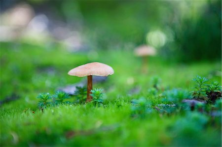fungus - Mushrooms in Garibaldi Provincial Park, British Columbia, Canada Stock Photo - Premium Royalty-Free, Code: 600-03641252