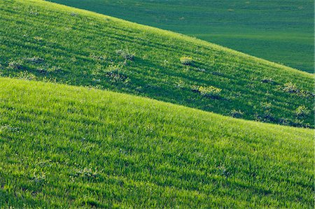 Hilly Wheat Field near Ronda, Malaga Province, Andalusia, Spain Stock Photo - Premium Royalty-Free, Code: 600-03682216