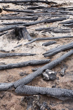 Burnt Logs in Forest, British Columbia, Canada Stock Photo - Premium Royalty-Free, Code: 600-03698367