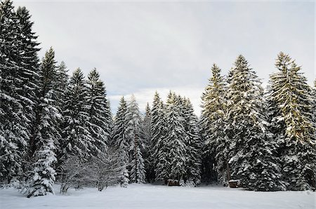 snow covered trees - Winter Landscape near Koenigsfeld, Black Forest, Baden-Wurttemberg, Germany Stock Photo - Premium Royalty-Free, Code: 600-03737977