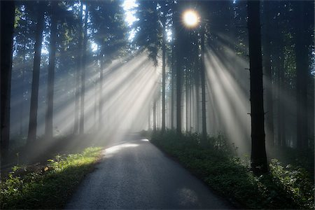 Road with Sunrays through Trees in Spring, Mostviertel, Lower Austria, Austria Stock Photo - Premium Royalty-Free, Code: 600-03738937