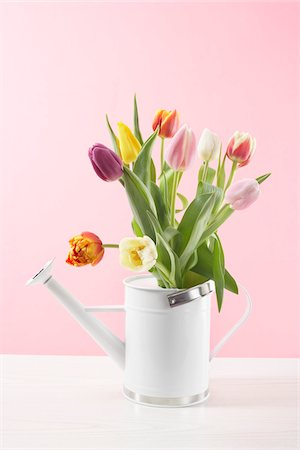 spring flowers - Tulips in Watering Can Stock Photo - Premium Royalty-Free, Code: 600-03762577