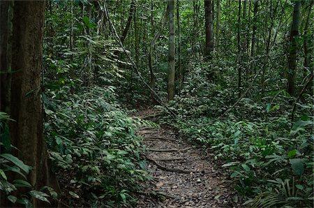 southeast asian - Path, Taman Negara National Park, Pahang, Malaysia Stock Photo - Premium Royalty-Free, Code: 600-03787690