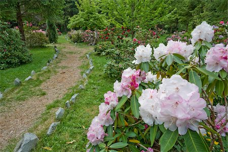 scenic and spring (season) - Rhododendrons in Woodland Gardens, Courtenay, British Columbia, Canada Stock Photo - Premium Royalty-Free, Code: 600-03814555