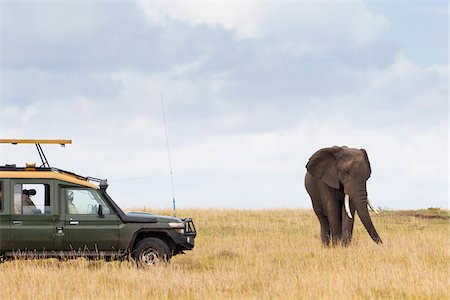 Safari Vehicle and African Bush Elephant, Masai Mara National Reserve, Kenya Stock Photo - Premium Royalty-Free, Code: 600-03814803